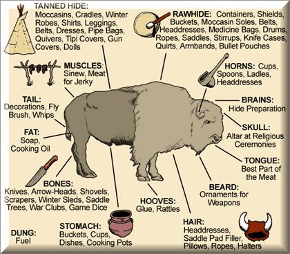Bison Poster - Bison History