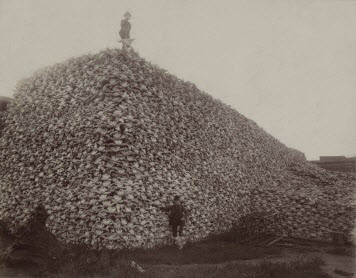 Bloomington Healthy Red Meat - Bison History